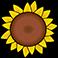 zonnebloem-card